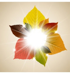 fall sunny leafs vector image vector image