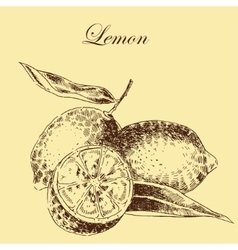 lemon citrus hand drawn sketch in ink and vector image