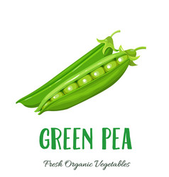 Green pea vegetable vector