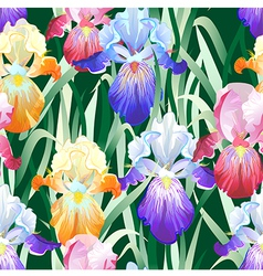 Seamless background with multicolored iris flowers vector