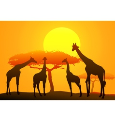 Sunset and giraffe in africa vector