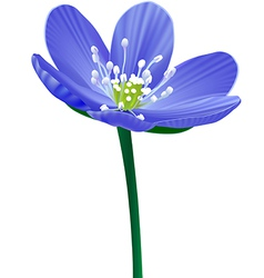 blue Flower isolated vector image