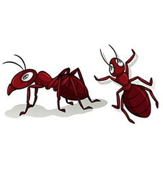 Simple red ants on white vector