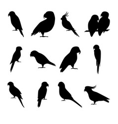 set of parrot silhouette icons in flat style vector image