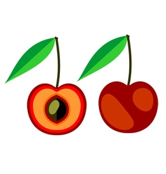 Cherry whole and half vector