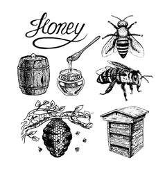 Honey vintage set vector
