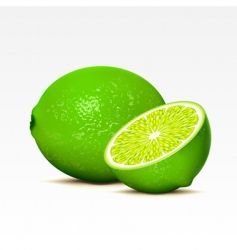 limes vector image vector image