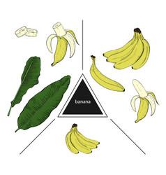 set of fruits whole banana banana slices and vector image