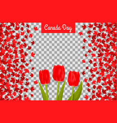 canada day background with maple leafs and tulips vector image
