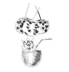 coconuts hand drawn sketch vintage style vector image vector image