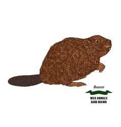 forest animal beaver hand drawn colored sketch on vector image vector image