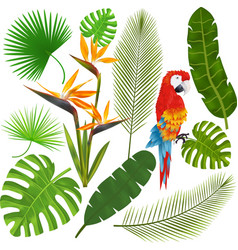 Tropical leaves flowers and macaw vector