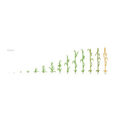 Wheat plant triticum cultivation agriculture vector