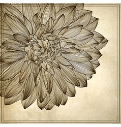 drawing of dahlia flower vector image