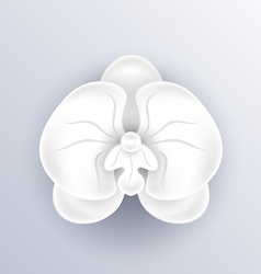 Cutout flower - beautiful orchid paper craft vector