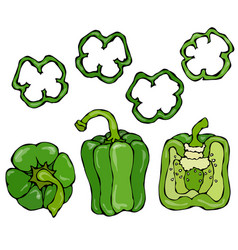 Green bell peper set half of sweet paprika and vector