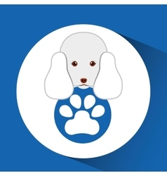 Digital pet shop with poodle and paw vector