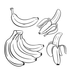 Set of outline bananas vector