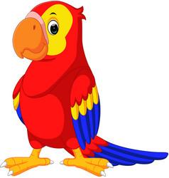 Cute macaw cartoon vector
