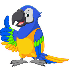 Cute macaw cartoon vector
