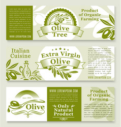 Olive oil and olives product banners vector