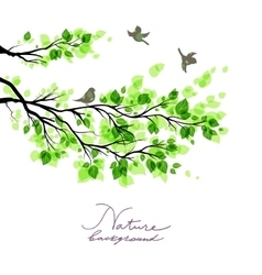 Birds with green branches vector image vector image
