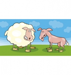 frightened sheep and shaved one vector image vector image