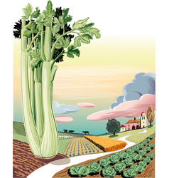Agricultural landscape planted with celery vector