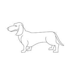 Dachshund dog line vector