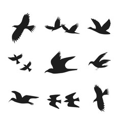 Silhouette black fly flock of birds vector