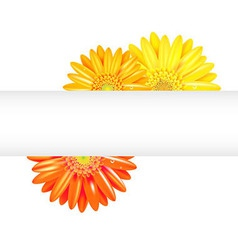 Yellow and orange gerbers with banner vector