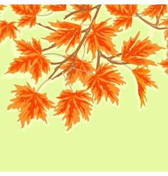 Maple leaves autumn theme green background vector image