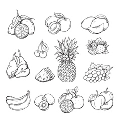 set of different hand drawn fruit vector image