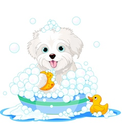 Fluffy dog having a bath vector