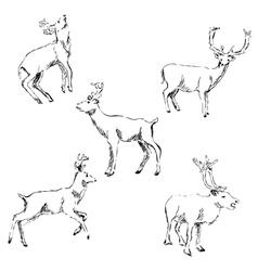 Deer sketch pencil drawing by hand vector
