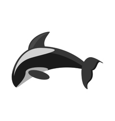 Killer whale marine wildlife species vector