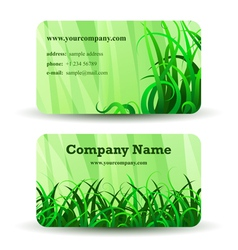 Herbal card vector image vector image