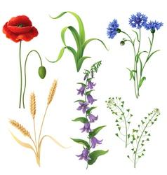 wildflowers set vector image vector image
