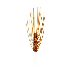 Wheat isolated vector