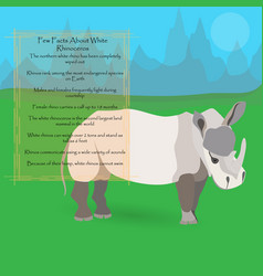 African white rhinoceros vector