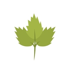 silhouette color with coriander leaf vector image