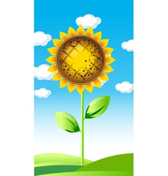 Sunflower summer landscape vector