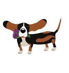 Dog basset hound with a bouquet of irises isolated vector