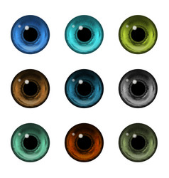Realistic detailed color human eyeballs or pupil vector