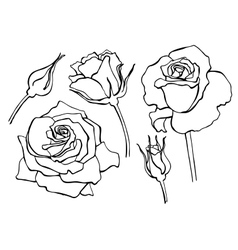 Set of hand-draw line rose collection vector