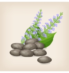 Chia seeds with flowers and leaves vector