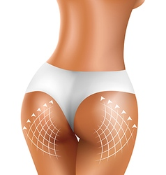 Perfect sexy firm buttock of healthy women in vector