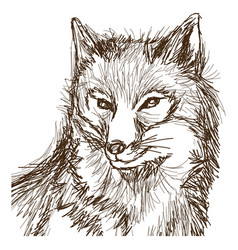 Wolf wildlife animal image is hand drawn portrait vector