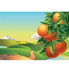 oranges on a branch in summer vector image