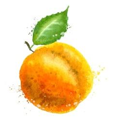 Apricot logo design template peach or vector